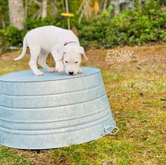 Georgie 7 Weeks Old