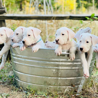 The Whole Litter