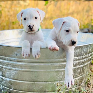 Pan and Tootles 5 Weeks Old