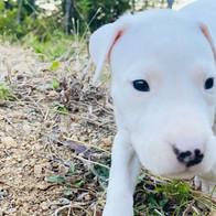 Rufio 4 Weeks Old