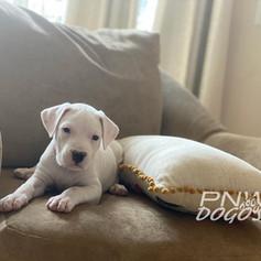 Roslyn 5 Weeks Old