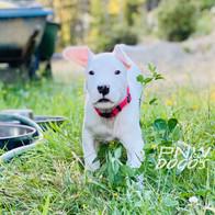 Rufio 6 Weeks Old