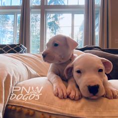 The Sisters 5 Weeks Old