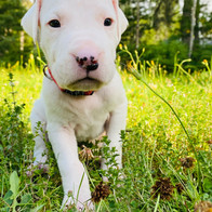 Rufio - 3 Weeks Old