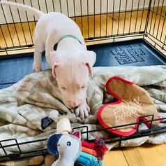 Teddy 5 Weeks Old
