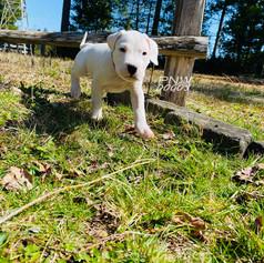 Georgie 6 Weeks Old