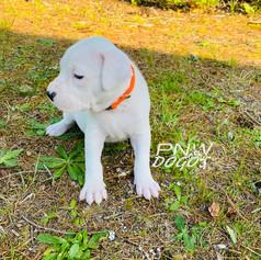 Roslyn 4 Weeks Old