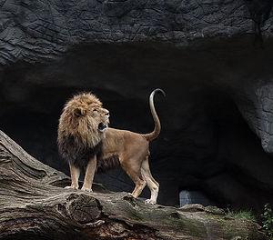 lion-2820431__480.jpg