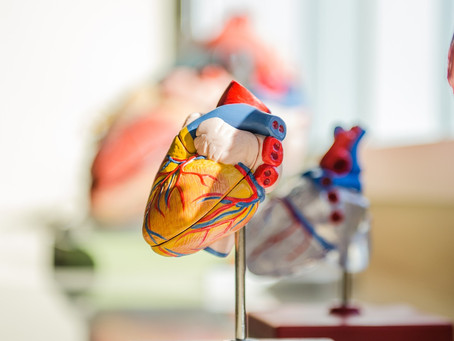 Scientists create portion of the heart starting from a patient's fat tissue and a 3D printer.