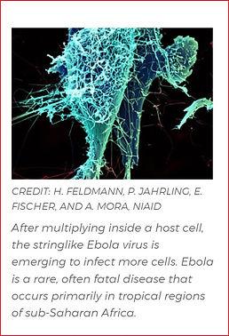 Ebola thumbnail.jpg