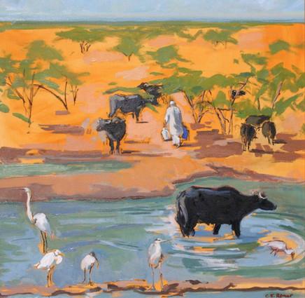 Milking Buffalo