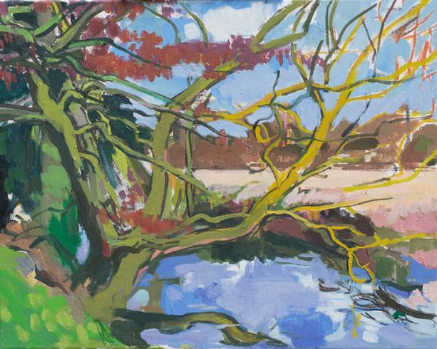 Alders in the River