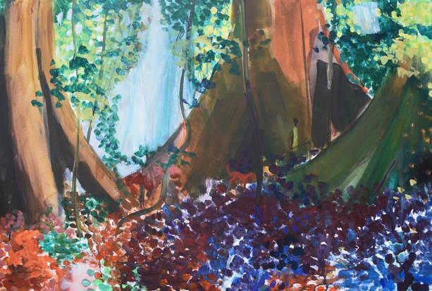 Bobiri Rainforest