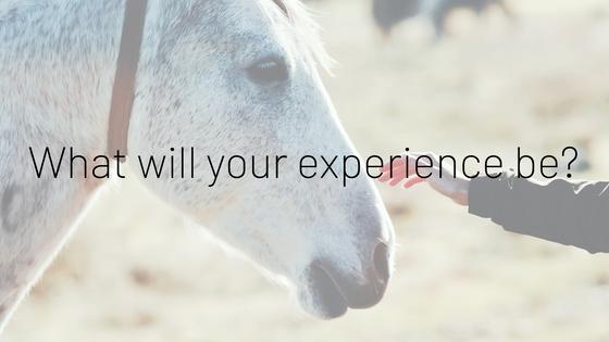 How equine coaching helps women