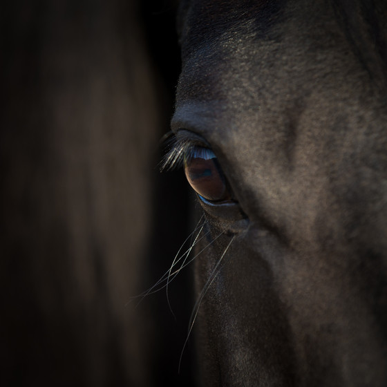 What is equine coaching?