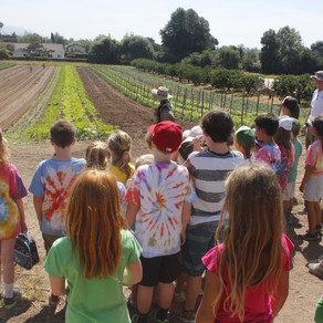 *CLOSED* Fairview Gardens Organic Farm Tour - Goleta, CA