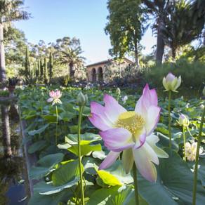 *CLOSED* Lotusland Tour and Trolley Ride - Santa Barbara, CA