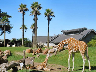 San Francisco Zoo (Private for Co-Op) - San Francisco, CA