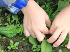 Kids Gardening Center - Riverside, CA