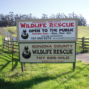 *Canceled* Private Tour- Sonoma County Wildlife Rescue
