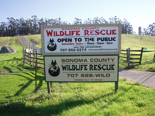 *Canceled* Private Tour- Sonoma County Wildlife Rescue