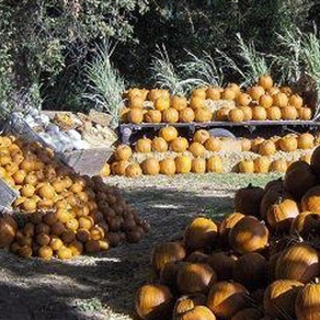 *CLOSED* Pumpkin Patch Visit and Fall Festival - Reedley, CA