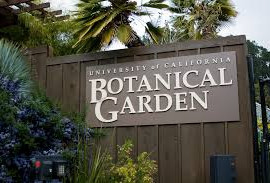 Free First Wednesdays at the Garden - Berkeley, CA