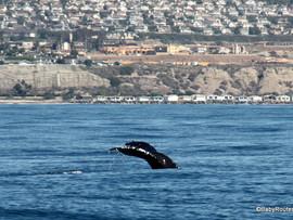Whale Walk and Talk - Dana Point, CA