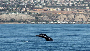 Whale Walk and Talk - Dana Point, CA