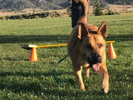 Paws On Dog Training Program for Teens & Tweens - Tehachapi, CA