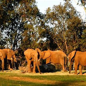 *CLOSED* San Diego Safari Park (Private for NUA Families) - San Diego, CA