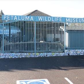 Petaluma Wildlife Museum Private Tour