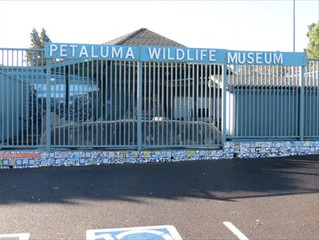 **CLOSED** Petaluma Wildlife Museum Private Tour