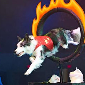 *CLOSED* Chris Perondi's Stunt Dog Experience Lancaster's Performing Arts Center - Lancaster, CA