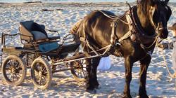 Martha's Vineyard Horse and Carriage