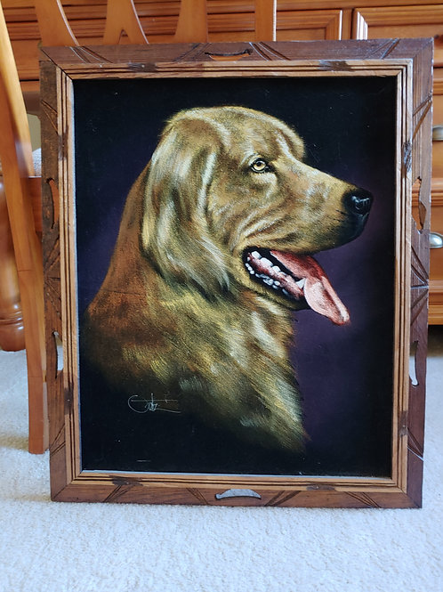 Golden Retriever Velvet