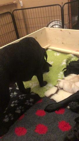 Fullservice... Mama säugt und Tante Orca putzt 😍