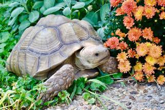 Tortoise_Flower.jpeg