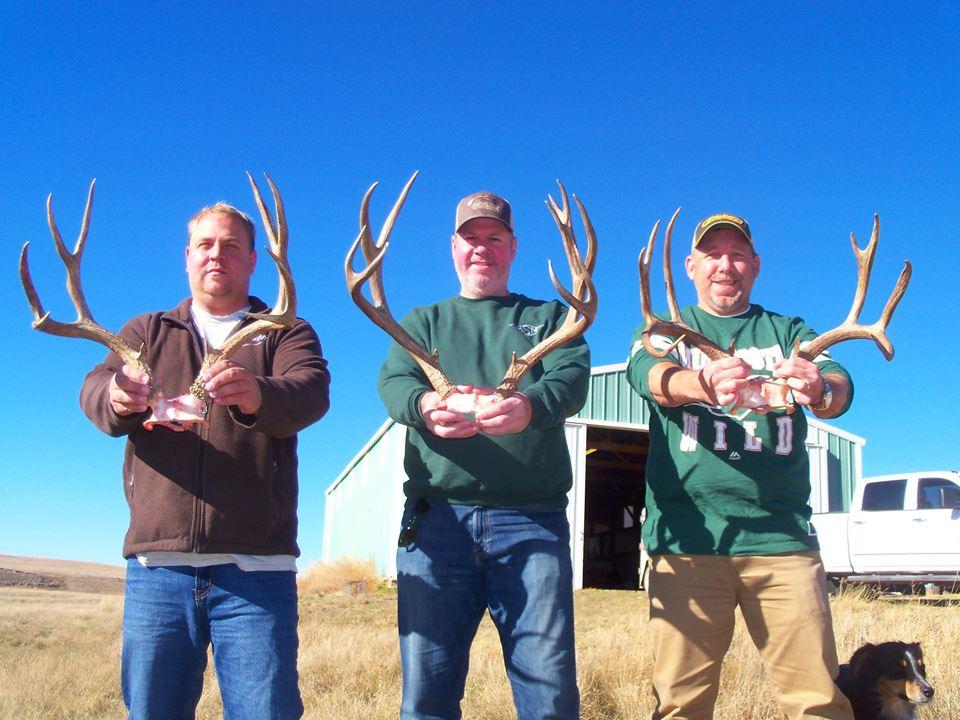 deer 31
