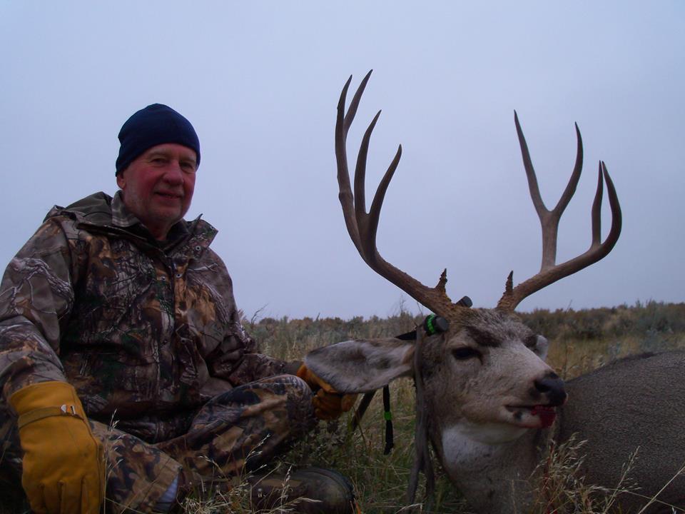 deer 25