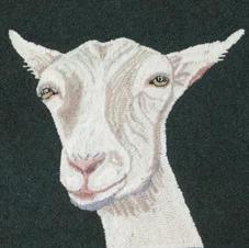 Ida Red, Saanen Goat