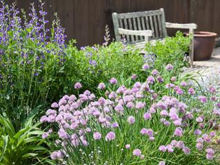 Herbs for a Healing Garden