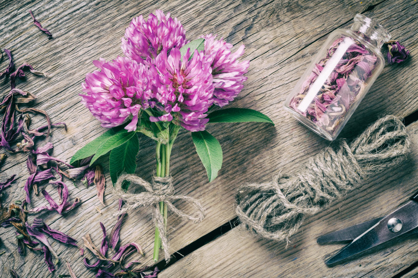 red clover bunch