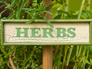 Herbs for Shade
