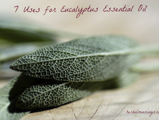 7 Uses for Eucalyptus Essential Oil