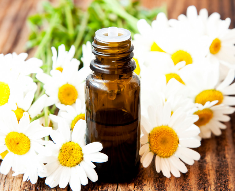 Learn how to make a chamomile tincture.