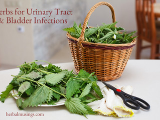 Herbs for Urinary Tract and Bladder Infections