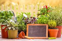 Organic Seeds for Herb Garden Kit