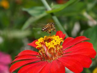 Healing Herbal Honeybee Tea