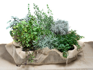 Herbs That Fight Diabetes